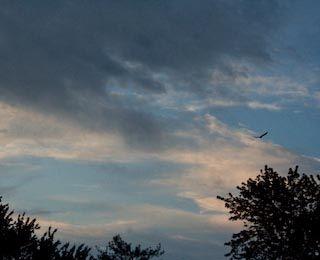 Dawn 5, bird, 5/7/09