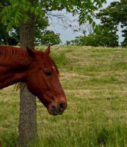 Horse Sense 3