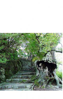 Old Rotted Tree, Miyajima Island, Japan